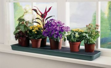 Какие комнатные растения будут приносить пользу?