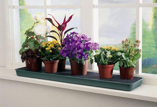 Домашние цветы в горшочках