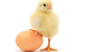 5 проверенных способов узнать, не испортилось ли яйцо