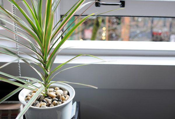 Пальмовые растения