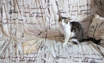 Как убрать запах кошачьей мочи с дивана — действенные методы
