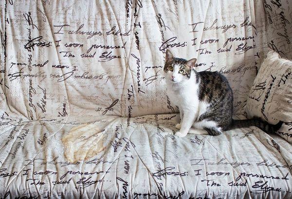 Как убрать с дивана запах кошачьей мочи
