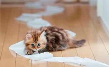 Как надежно вывести запах кошачьей мочи в квартире