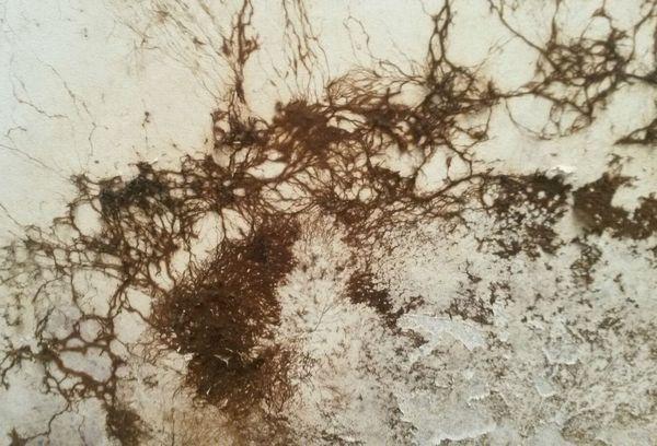 Плесневой грибок