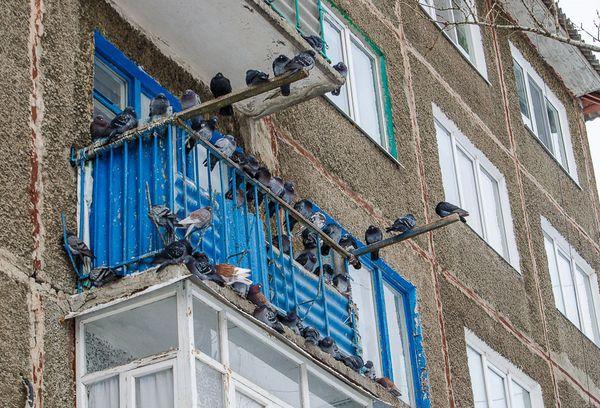 Птицы на балконе