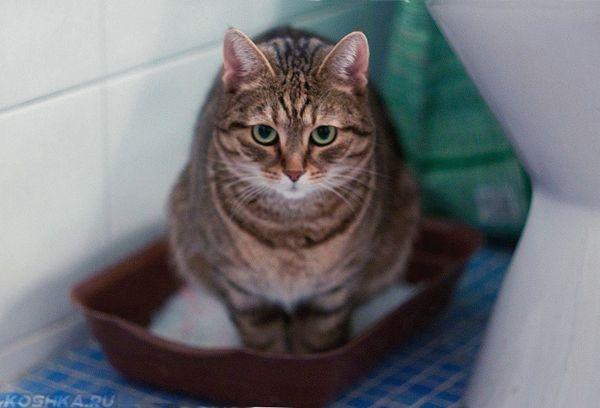 Большой кот в лотке