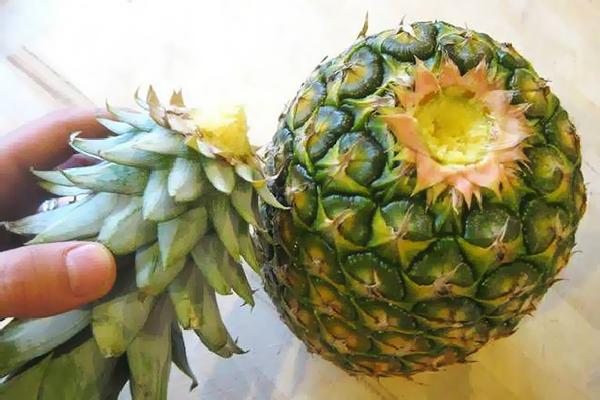 Отделенная верхушка от ананаса