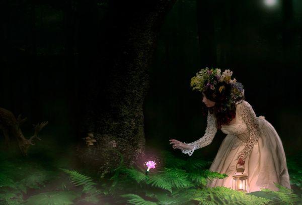 Поиск цветка папоротника