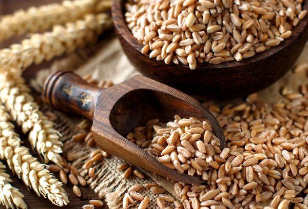 Пшеничная полба