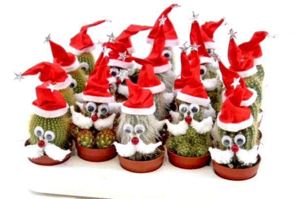Кактусы с шапками Санта-клауса